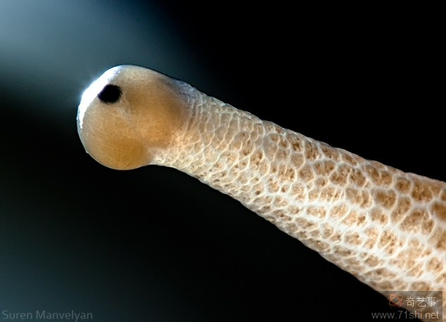 19) Snail
